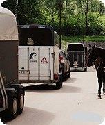 перевозка лошадей и разных других животных