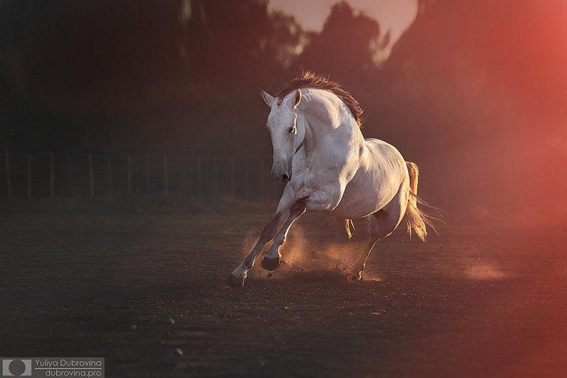 Жеребец лузитано Гайо наслаждается закатом и поздней осенью