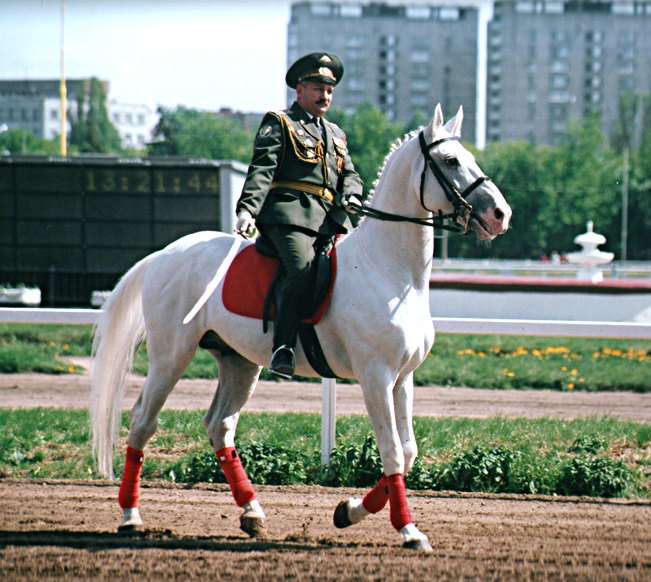 Директор ипподрома на белом коне.