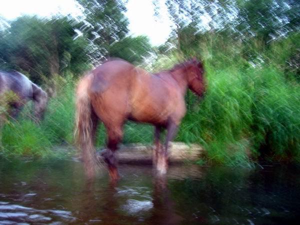 Толи лошадь, толи глюки... От чего трясутся руки? К вопросу об неверно выставленных настройках фотика...