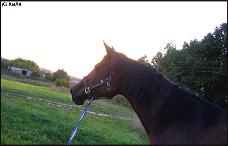 ...вдаль ,лето 2007, КСК Гармония, лошадь принадлежит ЧВ.