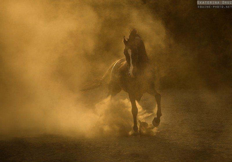 рожденный из золотых песков Раджастана