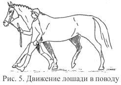 Движение лошади в поводу