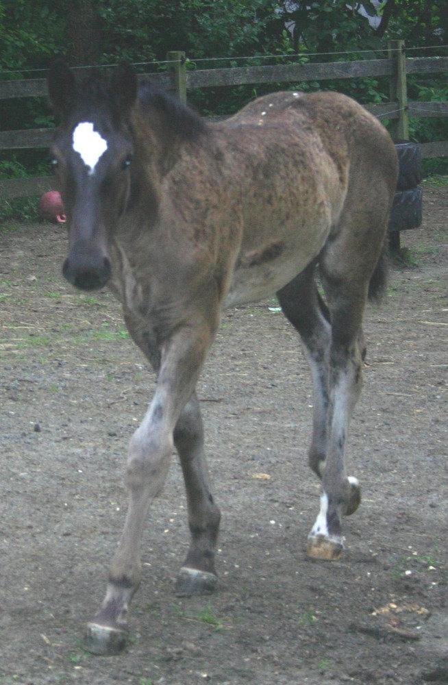 першерёнок 3 месяца