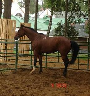 акустик-конь моей лучшей подруги!!