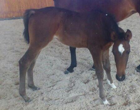 Наша новая малышка!))