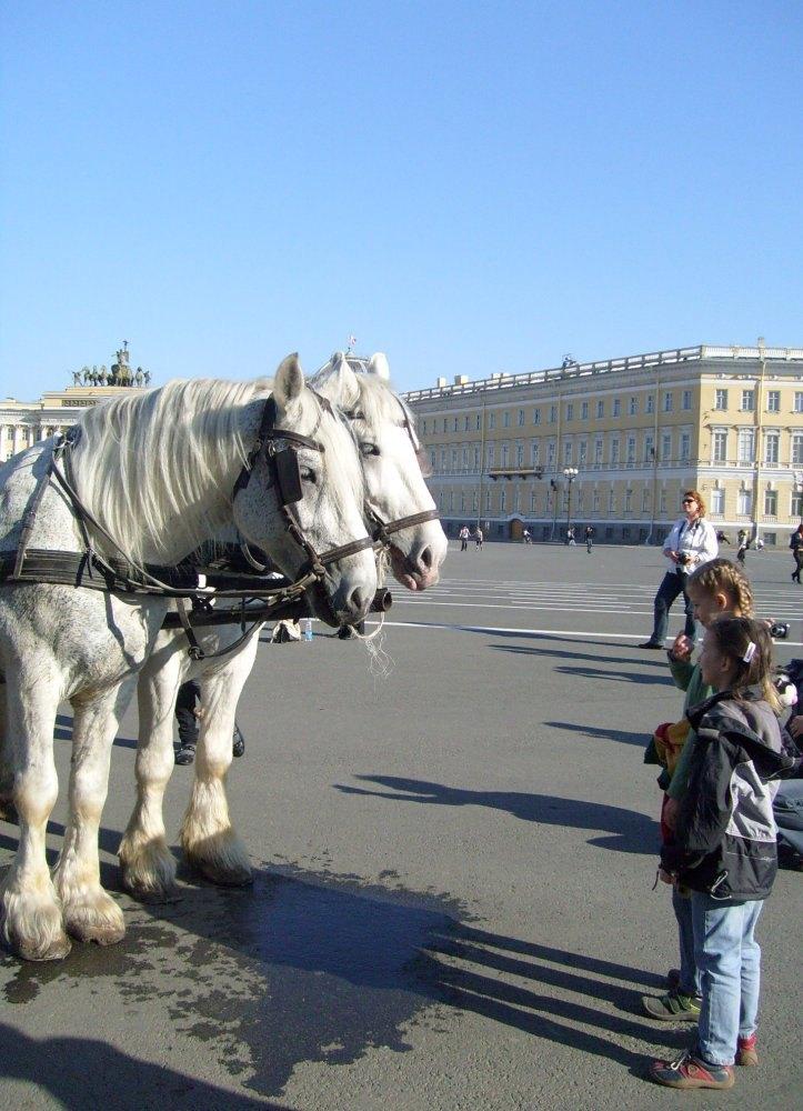 Дети-это кони,Кони-это дети