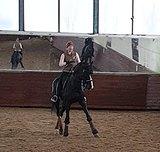 Выездковый конь