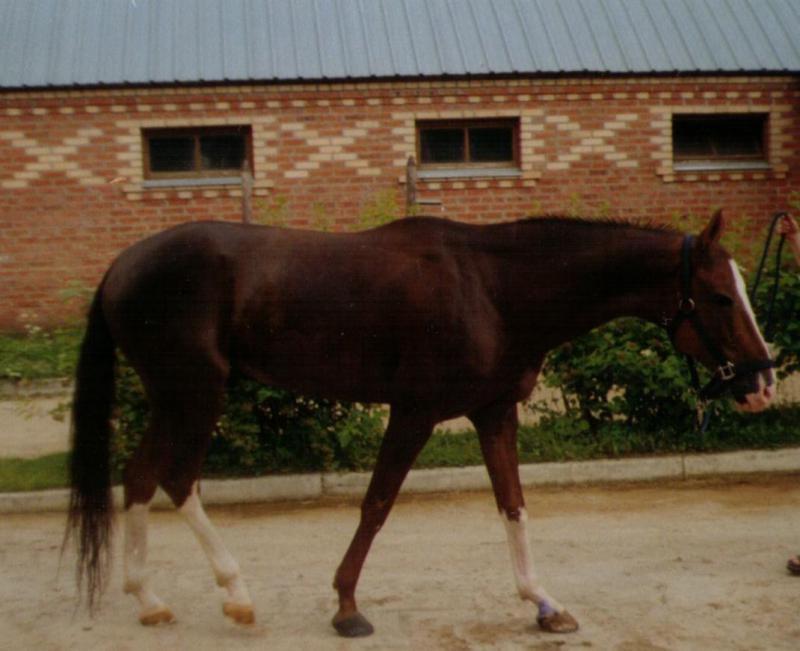 был такой конь... Жаль фото тёмное, это ещё с плёнки