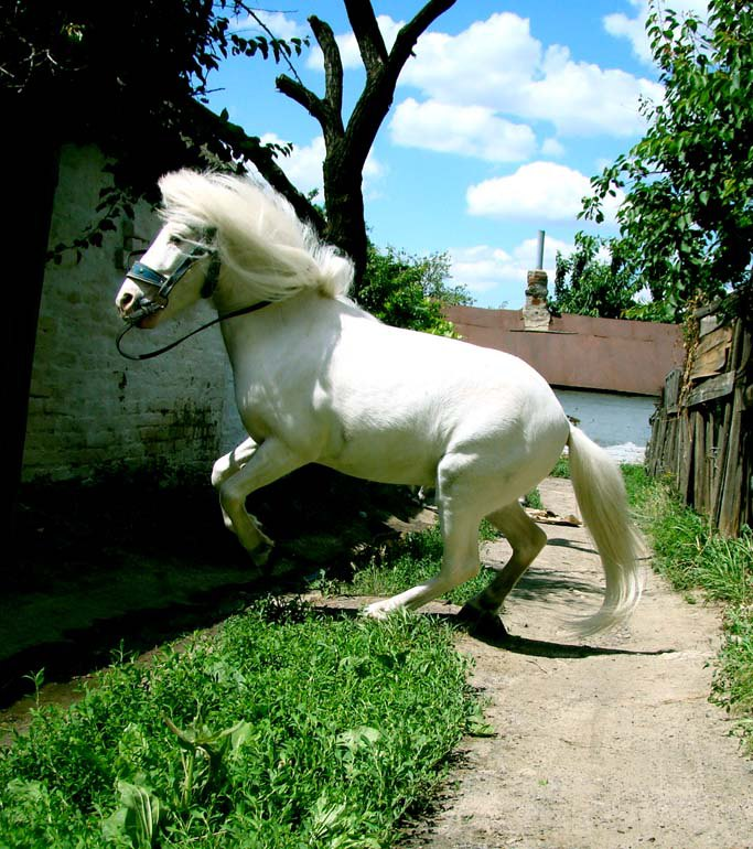 Пони тоже лошадь:)