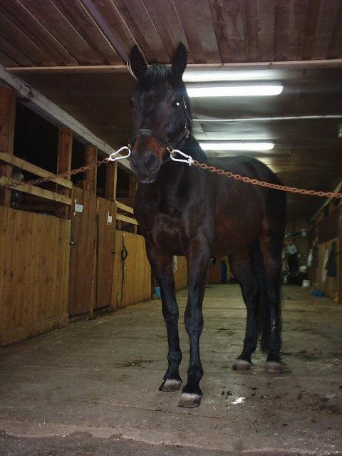 Свежепомытый конь