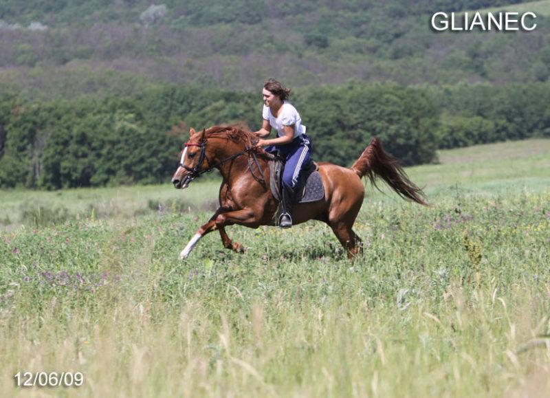 Жеребец общительный, добронравный, удобный под седлом,  на отличных движениях, может быть использован как производитель (линия Корея) Дополнительные фото и видео на сайте  http://horse-lc.ucoz.ru