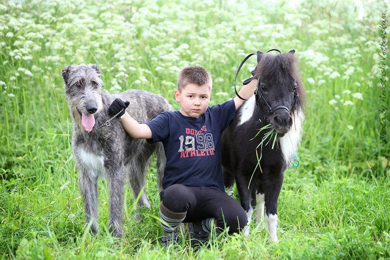 Кирилл, американская миниатюрная кобылка и щенок ирландца