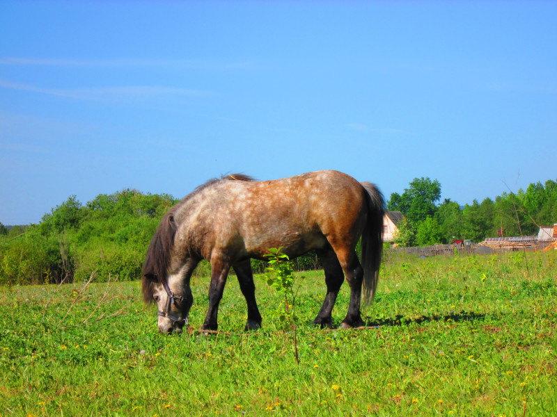 Успех, 6 лет. Небо, поле, лошадь, воля. Мое маленькое счастье.