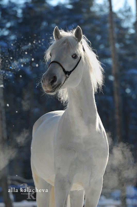 Зимний портрет.