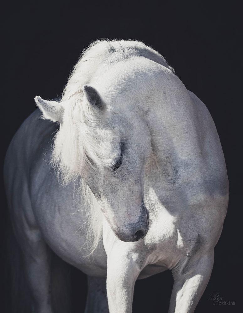 Орловский жеребец Гарем, Натальинский конный клуб