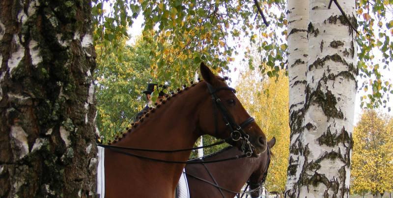 Осенний портрет. 2007 г, 30 сентября. После соревнования по выездке.