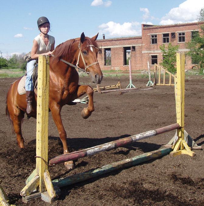 Ветеран конюшни, бывший спортсмен