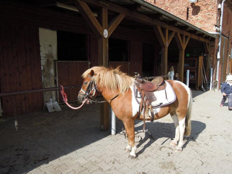 Horses in Germany. Germany 2012