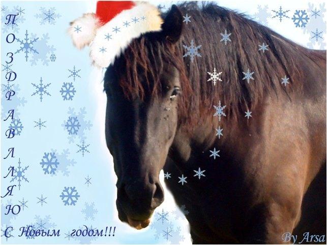 Всех посетителей сайта с наступающими праздниками!!!!Верных друзей среди людей и лошадей:)