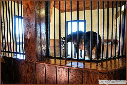 """Денник жеребца Dynaformer, чистокровной верховой породы, который проживает в конном заводе """"Three Chimney Farm"""" как почетный пенсионер.     Dynaformer - отец знаменитого Барбаро, но большей частью от этого жеребца были получены великолепные кобылы"""