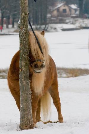 Кокетка Бьюти  69 см.фото Алексии Хрущёвой.