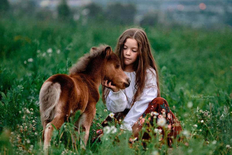 Американская миниатюрная лошадь Капучино
