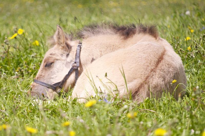 Спящий ребенок автоматически вызывает умиление=) Златогор, КК Мечта.