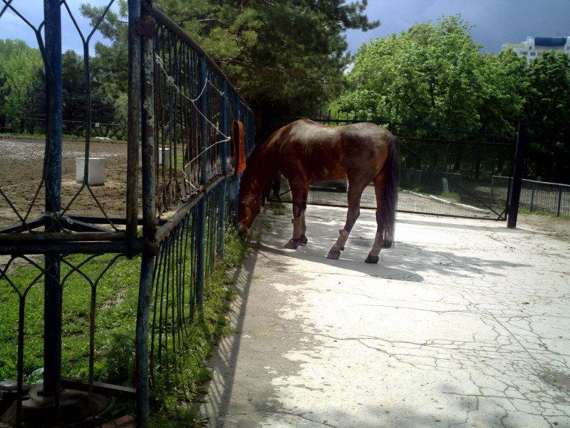 Лошадь которыя гуляет сама по  себе