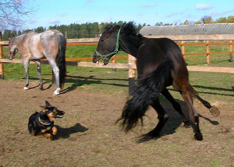 Rabies In Horse - 800×572