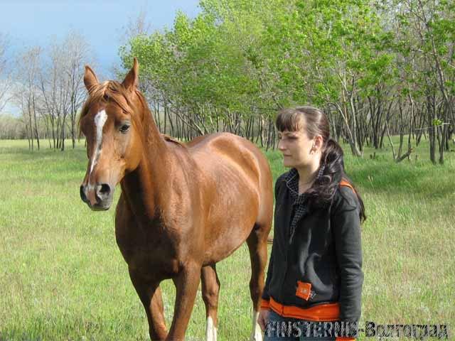 я люблю лошадей на свободе