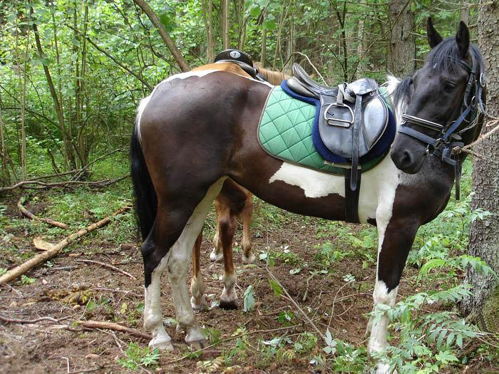 Лошадка не понимает, когда ее отведут домой и зачем ей на морду надели этот страшный агрегат