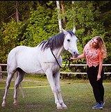 Идеальная лошадь для ребёнка или легкого всадника