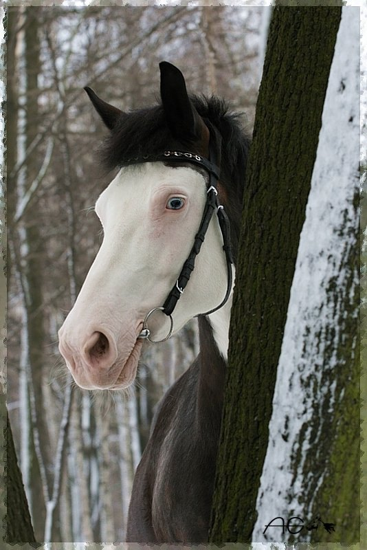 """Еще один портрет из-за дерева. В гостях у КСК """"Парк Екатерингоф"""" :))"""