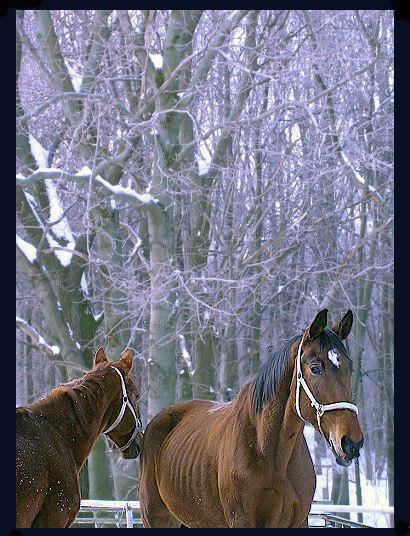 лошади из КСК Орлово