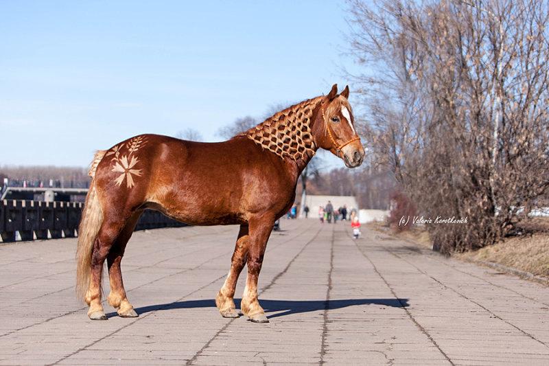 Бронза (Балтика - Хоккей) л. Анода. Международная выставка породистых лошадей в Минске. Чемпион ринга аборигенных пород