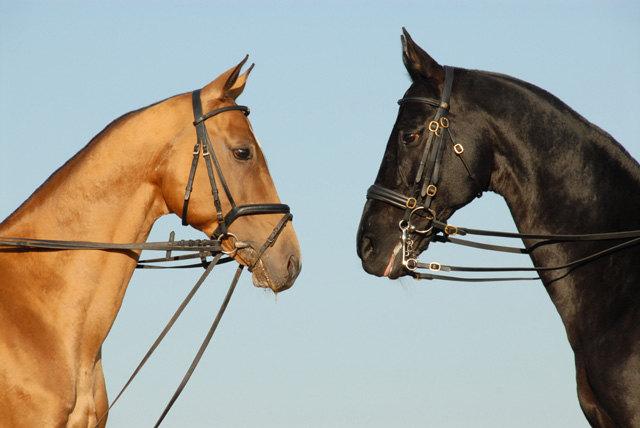 троеборные лошади друзей!!