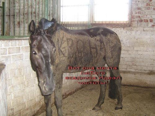 Лошадка любяшая лужи, поля и прыгать!!!
