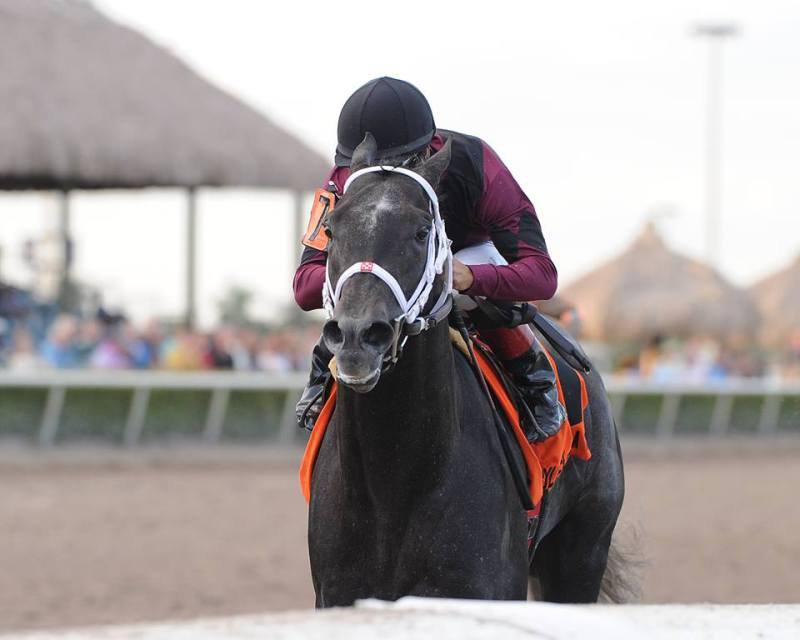 Ипподром Gulfstream Park 2014 год, скачка Holy Bull Stakes - Gr. 2
