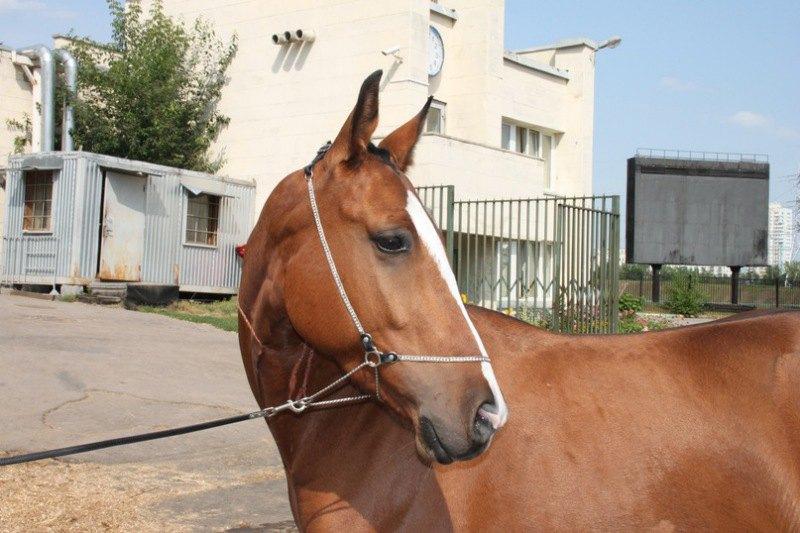 Маленькая фотосессия возле конюшни