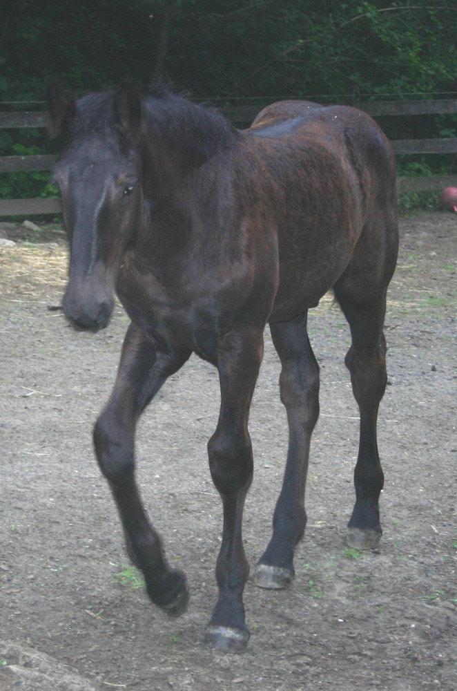 першерёнок 3.5 месяца