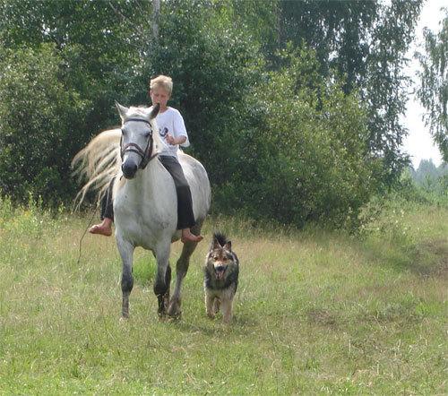 Начинается предварительная запись в детский конно-туристический лагерь.