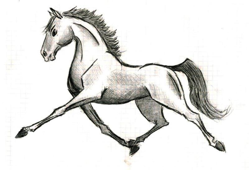 знаю, что с пропорциями, построением, тенями все не так, рисовала на лекции, даже ластика не было, так что не получилось ничего вразумительного, как всегда лошадь из мультика со здоровой головой и коротким телом =)