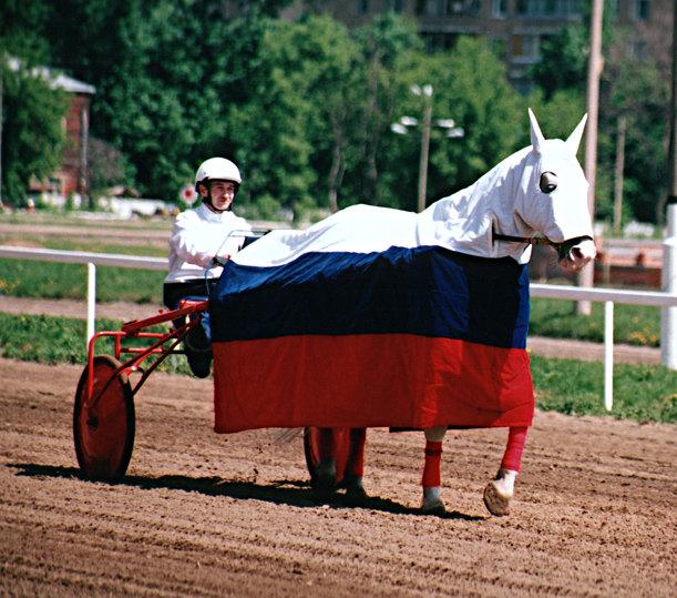 Рысак под попоной цветов российского триколора.