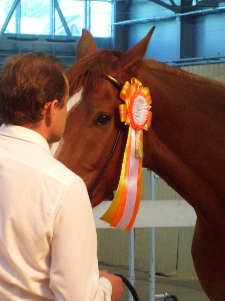 Мир человека и мир лошади
