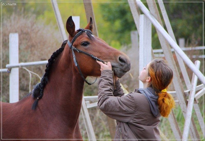 Где-то человек дрессирует лошадь,а где-то наоборот;). ЧВ, сентябрь 2009.