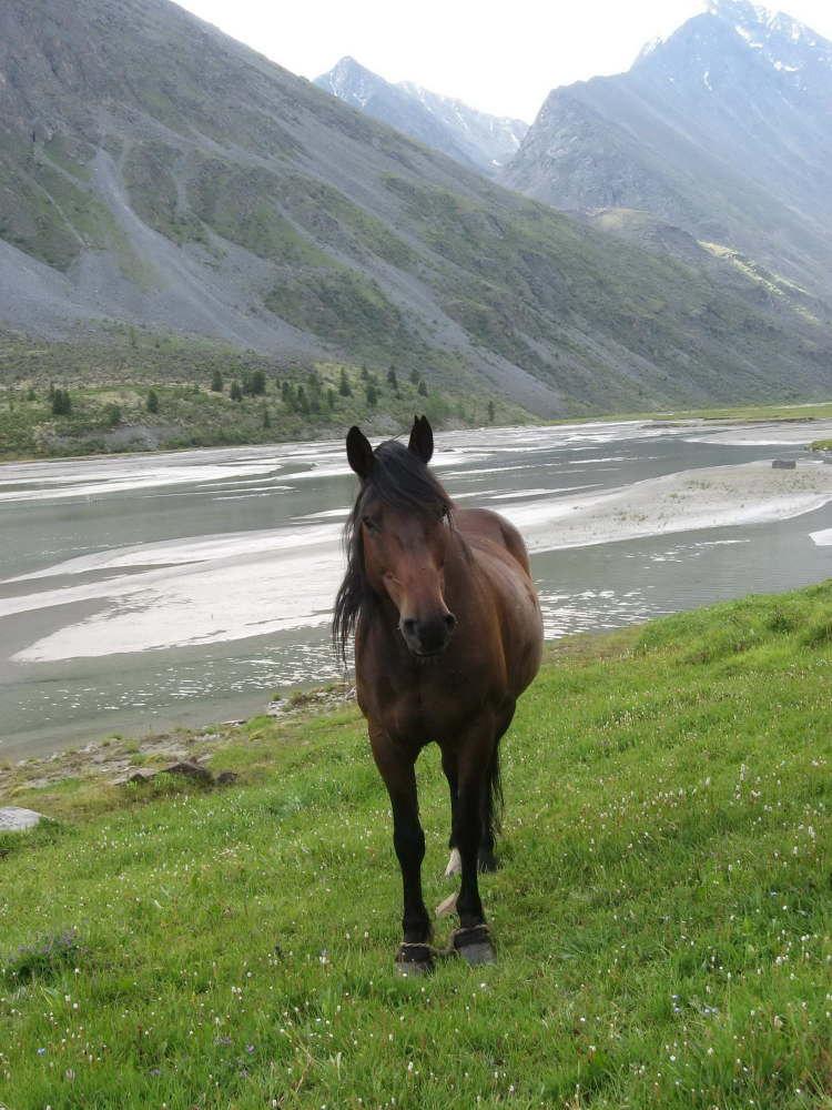 В конном походе на Алтае
