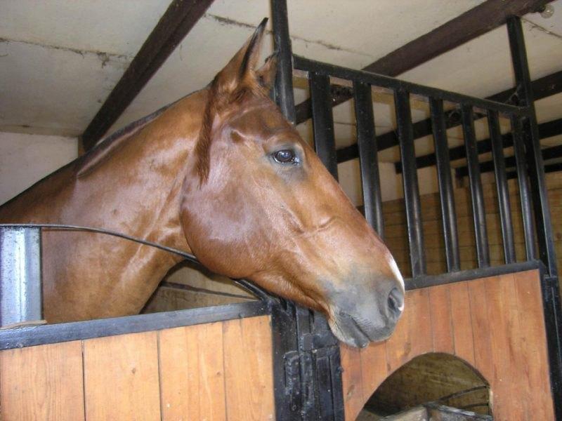 Стриженая лошадка :)