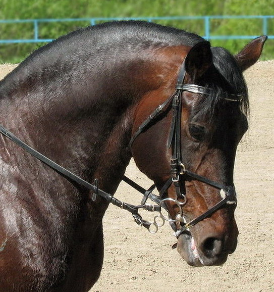 портретик Екатеринбургской лошадки