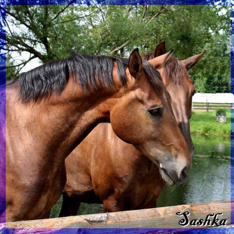 Лошади Белоруссии